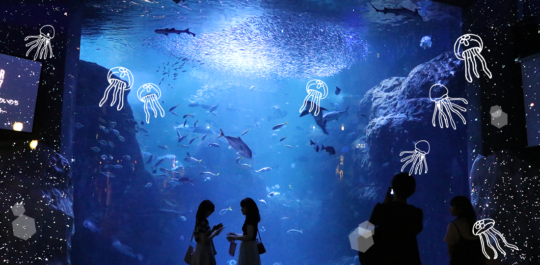 新江ノ島水族館 -クラゲの生態編-