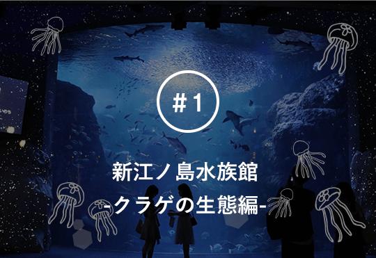 関東トップクラスの人気水族館!新江ノ島水族館でクラゲの知られざる生態や 秘密について飼育員さんに聞いてみた。