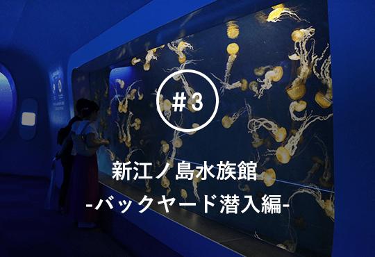 神奈川の人気観光スポット新江ノ島水族館のバックヤードに潜入!無数のクラゲ水槽に大興奮