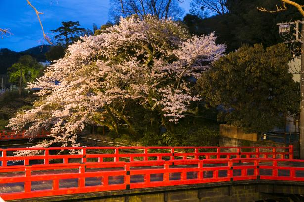 万葉公園(徒歩6分)春は見事な桜が。