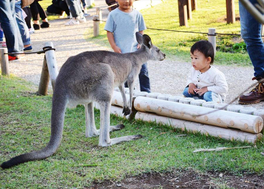 金沢動物園