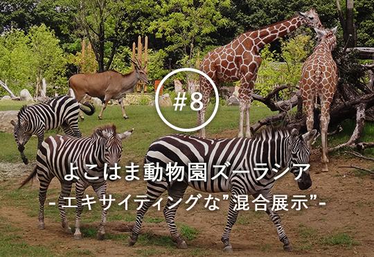 肉食動物と草食動物が共存する、エキサイティングな空間!  よこはま動物園ズーラシアの「混合展示」の秘密にせまる