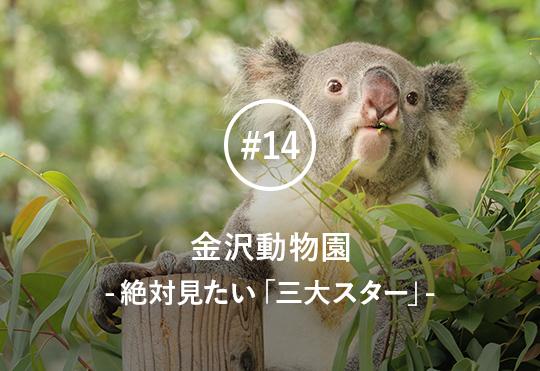 超VIPなコアラ、増えすぎ(?)カンガルー、マンモスみたいなゾウ、そしてカピバラ。金沢動物園で絶対見るべき三大スター&ニューカマーを飼育員が徹底解説